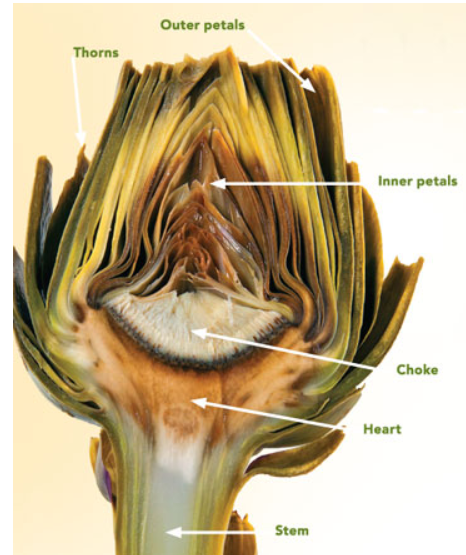 Do you know how to eat an artichoke?