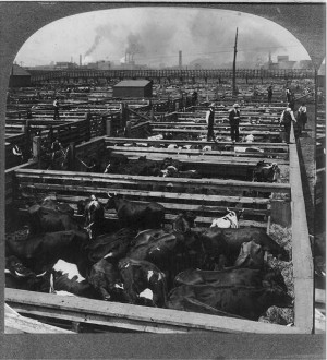 Union Stock Yards in Chicago
