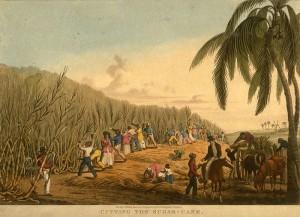 Sugar Cane Plantation in 18th Century Martinique